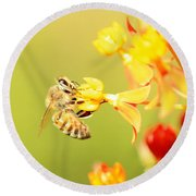 Round Beach Towel featuring the photograph  Bee On Milkweed by Greg Allore