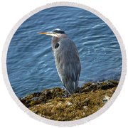 Round Beach Towel featuring the photograph  Blue Heron On A Rock by Eti Reid
