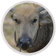 Round Beach Towel featuring the photograph  Buffalo by Michelle Meenawong