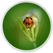 Round Beach Towel featuring the photograph  Ladybug by Michelle Meenawong