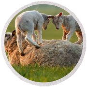 Leap Sheeping Lambs Round Beach Towel by Roeselien Raimond