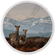 Sika Deer Round Beach Towel