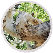 Sycamore Tree's Twisted Trunk Round Beach Towel