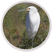 Yellow Foot Snowy Egret On Perch Round Beach Towel by Tom Janca