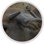 Round Beach Towel featuring the photograph  Young Buffalo by Michelle Meenawong