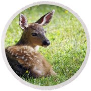 A Fawn On The Lawn Round Beach Towel