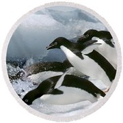Adelie Penguins Round Beach Towel