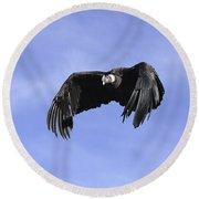 Andean Condor Round Beach Towel