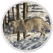 Round Beach Towel featuring the photograph Arctic Wolf by Wolves Only