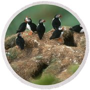 Atlantic Puffins Round Beach Towel by Art Wolfe
