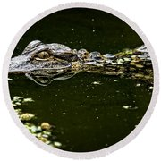 Baby Gator Round Beach Towel by Phill Doherty