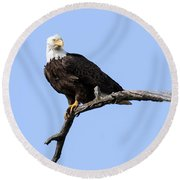 Bald Eagle 7 Round Beach Towel