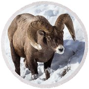 Round Beach Towel featuring the photograph Bighorn Sheep by Michael Chatt