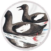 Black Guillemot Round Beach Towel