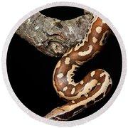 Blood Python Python Brongersmai Round Beach Towel by David Kenny