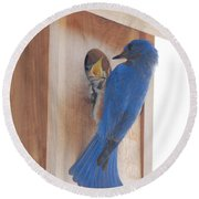 Bluebird Of Happiness Round Beach Towel