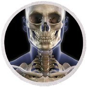 Bones Of The Head And Upper Thorax Round Beach Towel
