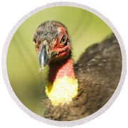 Brush Scrub Turkey Round Beach Towel