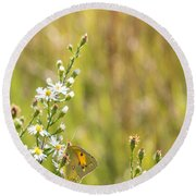 Butterfly In A Field Of Flowers Round Beach Towel