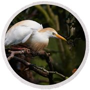 Cattle Egret In A Tree Round Beach Towel