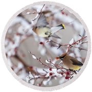 Round Beach Towel featuring the photograph Cedar Waxwing by Michael Chatt