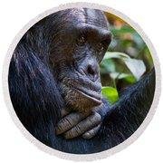 Close-up Of A Chimpanzee Pan Round Beach Towel