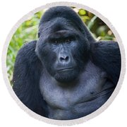 Close-up Of A Mountain Gorilla Gorilla Round Beach Towel by Panoramic Images