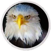 Closeup Portrait Of An American Bald Eagle Round Beach Towel