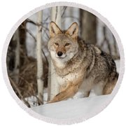 Coyote On The Prowl Round Beach Towel