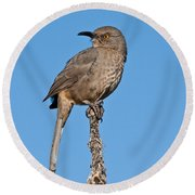 Curve-billed Thrasher Round Beach Towel