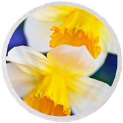 Round Beach Towel featuring the photograph Daffodils by Roselynne Broussard
