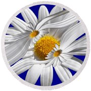 Daisy Delight Round Beach Towel