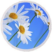 Daisy Flowers On Blue Background Round Beach Towel