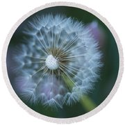 Round Beach Towel featuring the photograph Dandelion by Alana Ranney