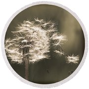 Round Beach Towel featuring the photograph Dandelion by Yulia Kazansky