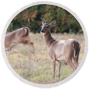 Deer At Paynes Prairie Round Beach Towel