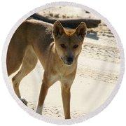 Dingo Round Beach Towel