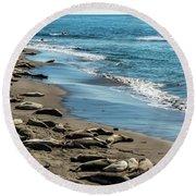 Elephant Seals On The Beach, Piedras Round Beach Towel