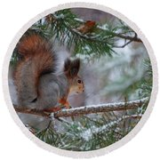 Eurasian Red Squirrel Round Beach Towel by Jouko Lehto
