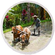Farmer With Oxen Working In Paddy Round Beach Towel