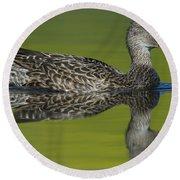 Female Mallard Duck In Small Marsh Pond Round Beach Towel