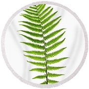 Fern Leaf Round Beach Towel by Elena Elisseeva