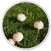 Field Of Mushrooms Round Beach Towel