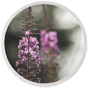 Round Beach Towel featuring the photograph Fireweed by Yulia Kazansky