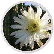 Flowering Cactus 1 Round Beach Towel