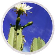 Flowering Cactus 2 Round Beach Towel