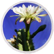 Flowering Cactus 3 Round Beach Towel