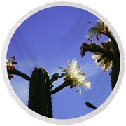 Flowering Cactus 4 Round Beach Towel