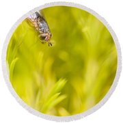 Fly Insect In Amongst A Flurry Of Yellow Leaves Round Beach Towel
