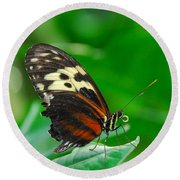 D5l15 Butterfly At Franklin Park Conservatory Round Beach Towel